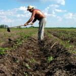 Cuba afirma que el bloqueo de EEUU causa unas pérdidas de 330 millones de dólares a su agricultura