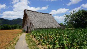 Tabaco Cuba